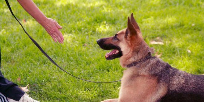 BAHÇELİEVLER Köpek Eğitimi