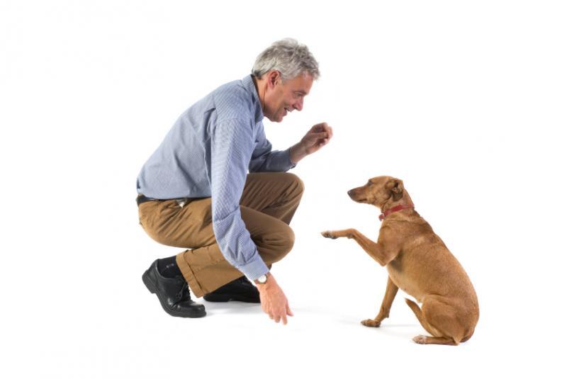 köpek-eğitimi