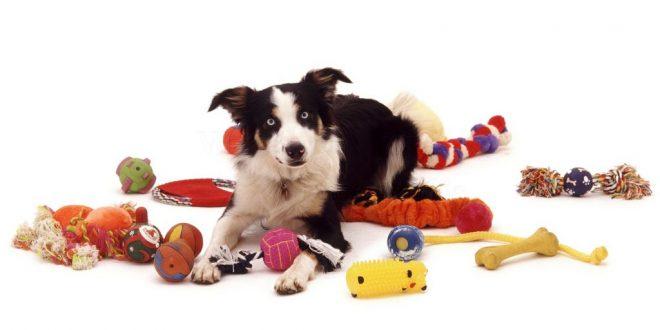 Köpeğime Hangi Oyuncağı Seçmeliyim?
