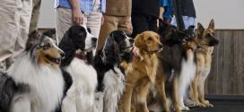 Köpek eğitimi için altın değerinde tavsiyeler