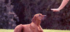 Köpek Eğitim Merkezi Fiyatları