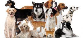 Sizin için en uygun köpek hangisi?